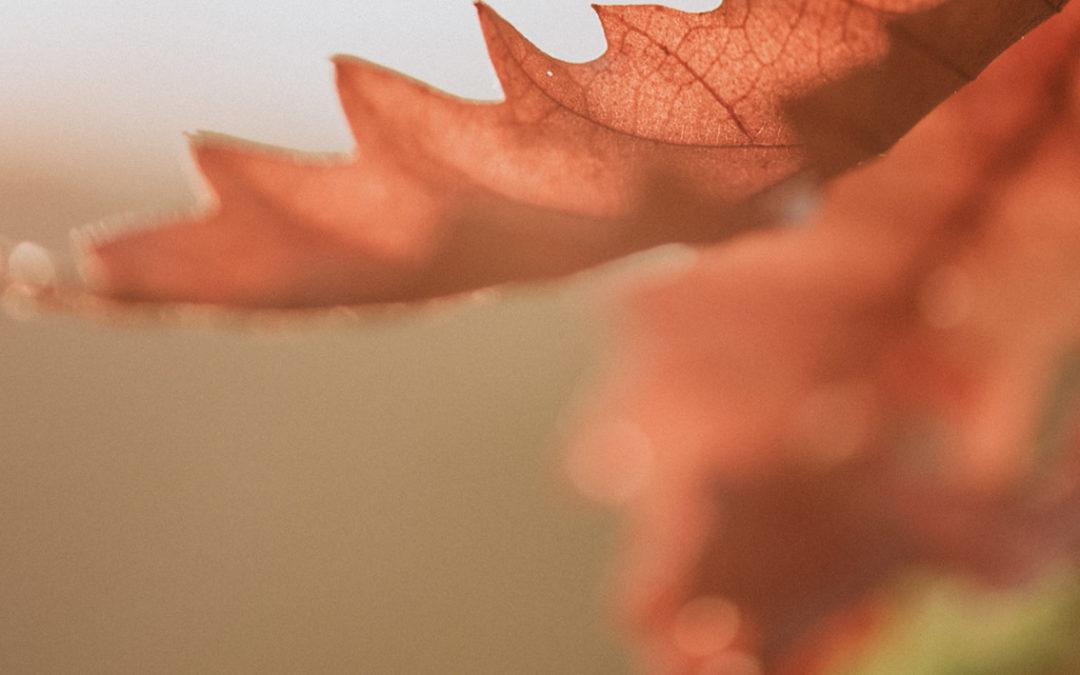 Blues de l'automne